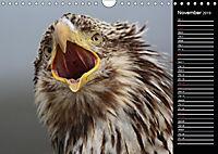 North America's Wildlife (Wall Calendar 2019 DIN A4 Landscape) - Produktdetailbild 11