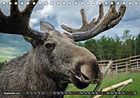 Norwegen, Oppland (Tischkalender 2019 DIN A5 quer) - Produktdetailbild 9