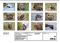NUTRIA mit Nachwuchs (Wandkalender 2019 DIN A2 quer) - Produktdetailbild 13