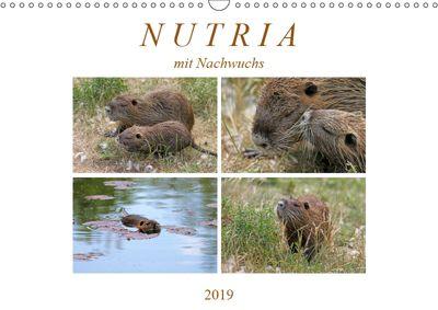 NUTRIA mit Nachwuchs (Wandkalender 2019 DIN A3 quer), SchnelleWelten