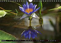 Nymphaea - Queen of lakes (Wall Calendar 2019 DIN A4 Landscape) - Produktdetailbild 6