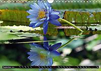 Nymphaea - Queen of lakes (Wall Calendar 2019 DIN A4 Landscape) - Produktdetailbild 9