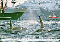Orcas: Schwarz-weiße Giganten (Tischkalender 2019 DIN A5 quer) - Produktdetailbild 2