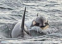 Orcas: Schwarz-weiße Giganten (Tischkalender 2019 DIN A5 quer) - Produktdetailbild 9