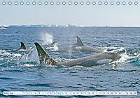 Orcas: Schwarz-weiße Giganten (Tischkalender 2019 DIN A5 quer) - Produktdetailbild 4