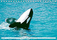 Orcas: Schwarz-weiße Giganten (Tischkalender 2019 DIN A5 quer) - Produktdetailbild 7