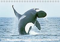 Orcas: Schwarz-weiße Giganten (Tischkalender 2019 DIN A5 quer) - Produktdetailbild 10