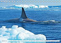 Orcas: Schwarz-weiße Giganten (Tischkalender 2019 DIN A5 quer) - Produktdetailbild 1