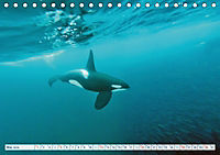 Orcas: Schwarz-weiße Giganten (Tischkalender 2019 DIN A5 quer) - Produktdetailbild 5