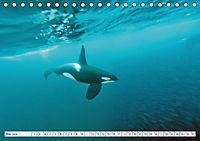 Orcas: Schwarz-weisse Giganten (Tischkalender 2019 DIN A5 quer) - Produktdetailbild 5