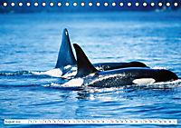 Orcas: Schwarz-weiße Giganten (Tischkalender 2019 DIN A5 quer) - Produktdetailbild 8