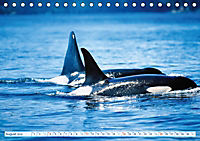 Orcas: Schwarz-weisse Giganten (Tischkalender 2019 DIN A5 quer) - Produktdetailbild 8