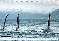 Orcas: Schwarz-weiße Giganten (Tischkalender 2019 DIN A5 quer) - Produktdetailbild 12