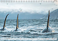 Orcas: Schwarz-weisse Giganten (Tischkalender 2019 DIN A5 quer) - Produktdetailbild 12