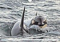 Orcas: Schwarz-weiße Giganten (Wandkalender 2019 DIN A4 quer) - Produktdetailbild 9