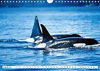 Orcas: Schwarz-weiße Giganten (Wandkalender 2019 DIN A4 quer) - Produktdetailbild 8