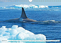 Orcas: Schwarz-weiße Giganten (Wandkalender 2019 DIN A4 quer) - Produktdetailbild 1
