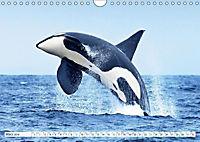 Orcas: Schwarz-weiße Giganten (Wandkalender 2019 DIN A4 quer) - Produktdetailbild 3