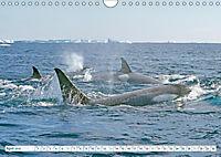 Orcas: Schwarz-weiße Giganten (Wandkalender 2019 DIN A4 quer) - Produktdetailbild 4