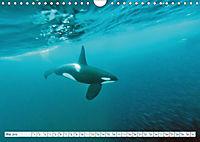 Orcas: Schwarz-weiße Giganten (Wandkalender 2019 DIN A4 quer) - Produktdetailbild 5