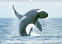 Orcas: Schwarz-weiße Giganten (Wandkalender 2019 DIN A4 quer) - Produktdetailbild 10