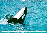 Orcas: Schwarz-weiße Giganten (Wandkalender 2019 DIN A4 quer) - Produktdetailbild 7