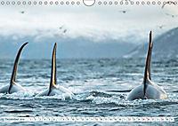 Orcas: Schwarz-weiße Giganten (Wandkalender 2019 DIN A4 quer) - Produktdetailbild 12