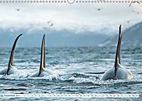 Orcas: Schwarz-weiße Giganten (Wandkalender 2019 DIN A3 quer) - Produktdetailbild 12