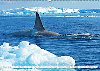 Orcas: Schwarz-weiße Giganten (Wandkalender 2019 DIN A2 quer) - Produktdetailbild 1