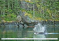 Orcas: Schwarz-weiße Giganten (Wandkalender 2019 DIN A2 quer) - Produktdetailbild 11