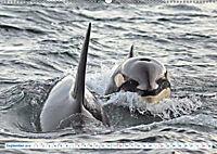 Orcas: Schwarz-weiße Giganten (Wandkalender 2019 DIN A2 quer) - Produktdetailbild 9