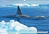 Orcas: Schwarz-weiße Giganten (Wandkalender 2019 DIN A3 quer) - Produktdetailbild 1