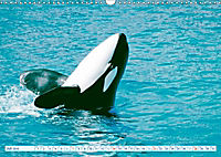 Orcas: Schwarz-weiße Giganten (Wandkalender 2019 DIN A3 quer) - Produktdetailbild 7