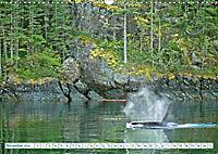 Orcas: Schwarz-weiße Giganten (Wandkalender 2019 DIN A3 quer) - Produktdetailbild 11