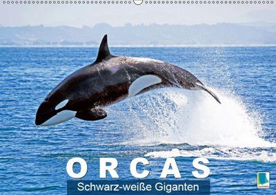 Orcas: Schwarz-weiße Giganten (Wandkalender 2019 DIN A2 quer), CALVENDO