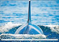 Orcas: Schwarz-weiße Giganten (Wandkalender 2019 DIN A2 quer) - Produktdetailbild 6