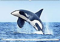 Orcas: Schwarz-weiße Giganten (Wandkalender 2019 DIN A2 quer) - Produktdetailbild 3