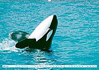 Orcas: Schwarz-weiße Giganten (Wandkalender 2019 DIN A2 quer) - Produktdetailbild 7