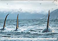 Orcas: Schwarz-weiße Giganten (Wandkalender 2019 DIN A2 quer) - Produktdetailbild 12