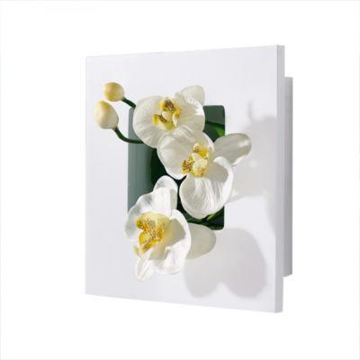 Orchidee im Bilderrahmen, weiß