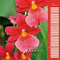 Orchideen 2018 - Produktdetailbild 2
