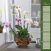 Orchideen 2018 - Produktdetailbild 8