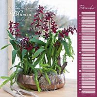 Orchideen 2018 - Produktdetailbild 12