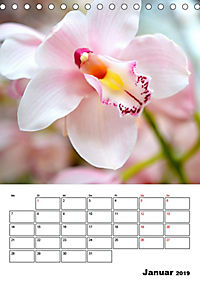 Orchideen - Tropische Schönheiten (Tischkalender 2019 DIN A5 hoch) - Produktdetailbild 1