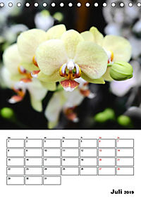 Orchideen - Tropische Schönheiten (Tischkalender 2019 DIN A5 hoch) - Produktdetailbild 7