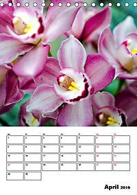 Orchideen - Tropische Schönheiten (Tischkalender 2019 DIN A5 hoch) - Produktdetailbild 4