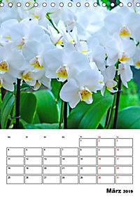Orchideen - Tropische Schönheiten (Tischkalender 2019 DIN A5 hoch) - Produktdetailbild 3