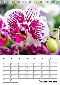 Orchideen - Tropische Schönheiten (Tischkalender 2019 DIN A5 hoch) - Produktdetailbild 12
