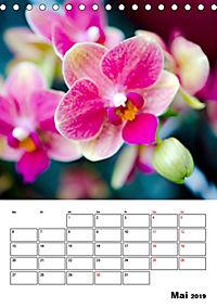 Orchideen - Tropische Schönheiten (Tischkalender 2019 DIN A5 hoch) - Produktdetailbild 5