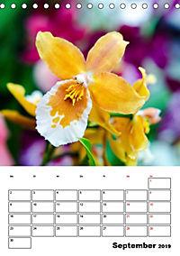 Orchideen - Tropische Schönheiten (Tischkalender 2019 DIN A5 hoch) - Produktdetailbild 9